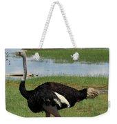 Male Ostrich Weekender Tote Bag