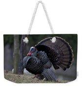 Male Wild Turkey, Meleagris Gallopavo Weekender Tote Bag