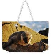 Malibu California Baby Sea Lion Weekender Tote Bag
