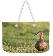 Mallard Duck Anas Platyrhynchos, Female Weekender Tote Bag
