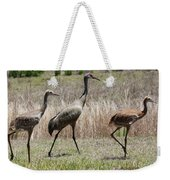 Mama And Two Juvenile Sandhill Cranes Weekender Tote Bag