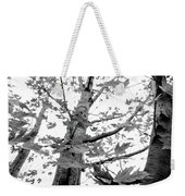 Maple Trees In Black And White Weekender Tote Bag