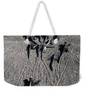 Galloping Iguanas Of Galapagos Weekender Tote Bag
