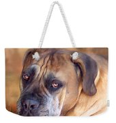 Mastiff Portrait Weekender Tote Bag by Carol Cavalaris