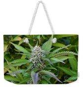 Medicinal Marijuana Growing Weekender Tote Bag