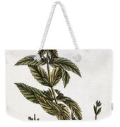 Mint Plant, 1735 Weekender Tote Bag