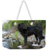 Mississippi River Posing Dog Weekender Tote Bag
