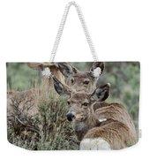 Montana Mule Deer On A Spring Night Weekender Tote Bag