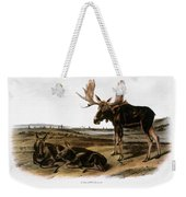 Moose Deer (cervus Alces) Weekender Tote Bag by Granger
