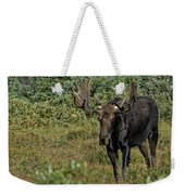 Moose In Shrubs Weekender Tote Bag