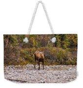 Moose Pawses In Mid-drink Weekender Tote Bag