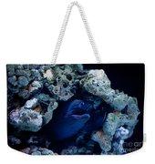 Moray Eel Or Muraenidae Fish Weekender Tote Bag