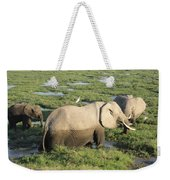 Mother And Calves Weekender Tote Bag
