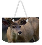 Mule Deer In Velvet 03 Weekender Tote Bag