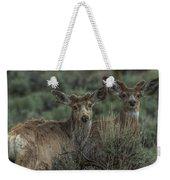 Mule Deer Visitors At Sunset Weekender Tote Bag