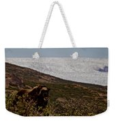 Musk Ox In Front Of Greenlandic Icecap Weekender Tote Bag
