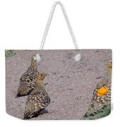 Namaqua Sandgrouse Weekender Tote Bag