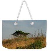 Nature Bonzai In The Evening Sun Weekender Tote Bag