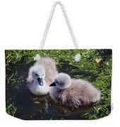 Newly Hatched Cygnets At Abbotsbury Weekender Tote Bag