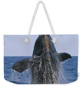 North Atlantic Right Whale Breaching Weekender Tote Bag by Tony Beck