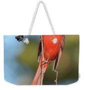 Northern Cardinal With Berry Weekender Tote Bag
