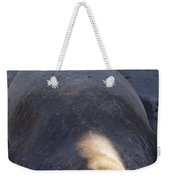 Northern Elephant Seal Weekender Tote Bag