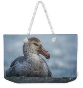 Northern Giant Petrel Sitting On Sandy Beach Weekender Tote Bag