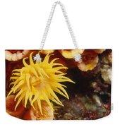 Oange Cup Coral, Tubastraea Coccinea Weekender Tote Bag