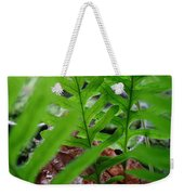 Office Art Forest Ferns Green Fern Giclee Prints Baslee Troutman Weekender Tote Bag