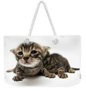 One Week Old Kittens Weekender Tote Bag