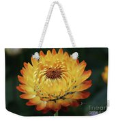 Orange And Yellow Strawflower Weekender Tote Bag