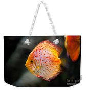 Orange Aquarium Fish In Zoo Weekender Tote Bag