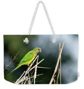 Orange-fronted Parakeet Weekender Tote Bag