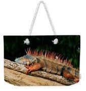 Orange Iguana Close Up Weekender Tote Bag
