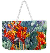 Yellow-orange Kangaroo Paws At Pilgrim Place In Claremont-california- Weekender Tote Bag