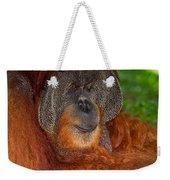 Orangutan Male Weekender Tote Bag
