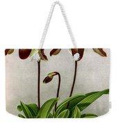 Orchid, C. Oenanthum Superbum, 1891 Weekender Tote Bag
