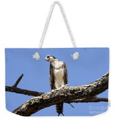 Osprey In The Trees Weekender Tote Bag