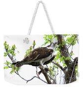 Osprey With Snack Weekender Tote Bag