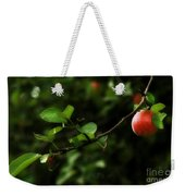 Out On A Limb  A Tempting Photograph Of A Tasty Ripe Red Apple On A Tree  Weekender Tote Bag