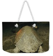 Pacific Or Olive Ridley Turtle Laying Weekender Tote Bag