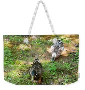 Pair Of Mallard Duck 5 Weekender Tote Bag