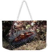 Panamic Deer Cowrie, Cypraea Cervinetta Weekender Tote Bag