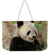 Panda Bear With Teeth Showing While He Was Eating Bamboo Weekender Tote Bag
