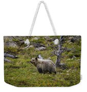 Panda In Many Glacier Weekender Tote Bag