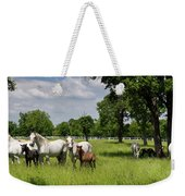 Panorama Of White Lipizzaner Mare Horses With Dark Foals Grazing Weekender Tote Bag