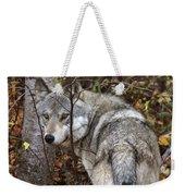 Panoramic Gray Wolf Yukon Weekender Tote Bag
