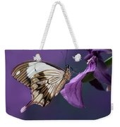 Papilio Dardanus On Violet Flowers Weekender Tote Bag