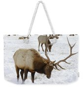 Pawing For Food Weekender Tote Bag