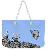 Pelican Landing On A Rock Weekender Tote Bag